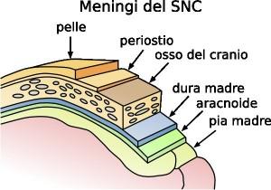 Meningi del sistema nervoso centrale